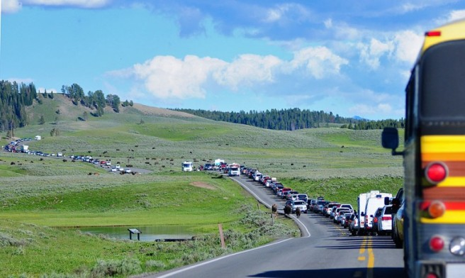 yellowstone-buffalo-jam-771x461